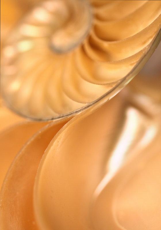 Nautilus 3.jpg