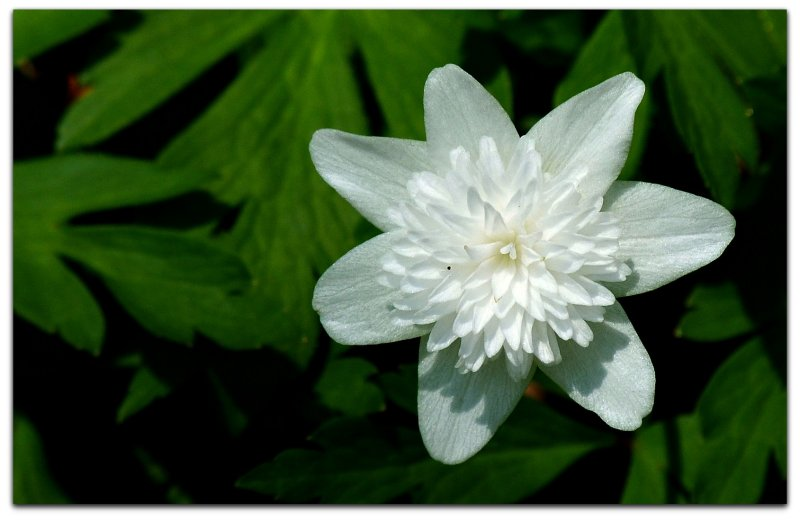 unnamed wildflower