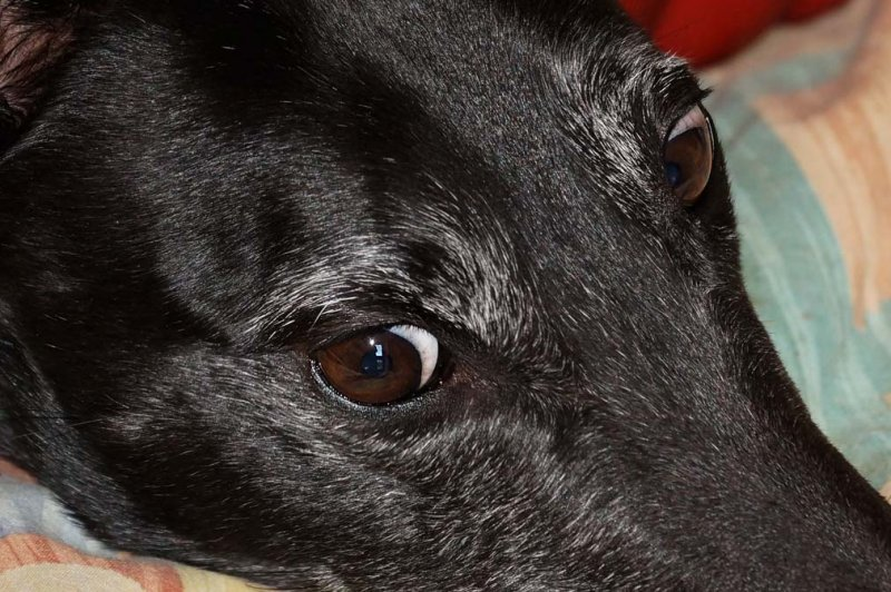 Dogs Eyes 2.1 Clear Image Zoom