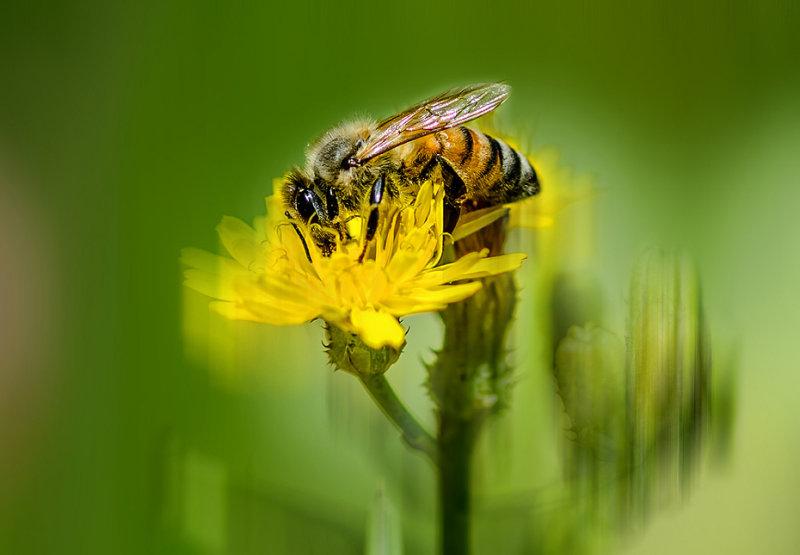 Bee tween the flowers