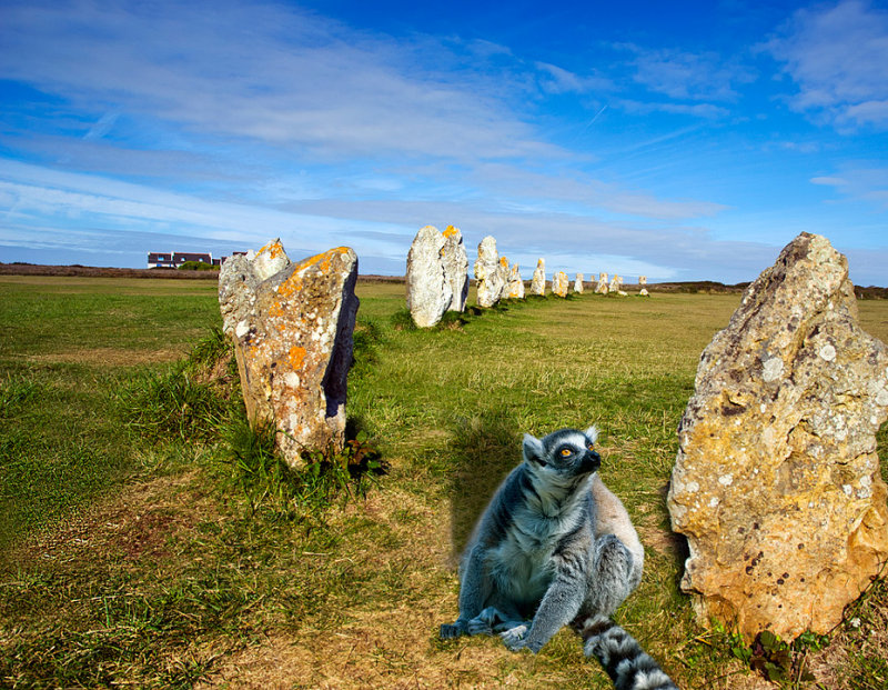 Pre-historic lemur?