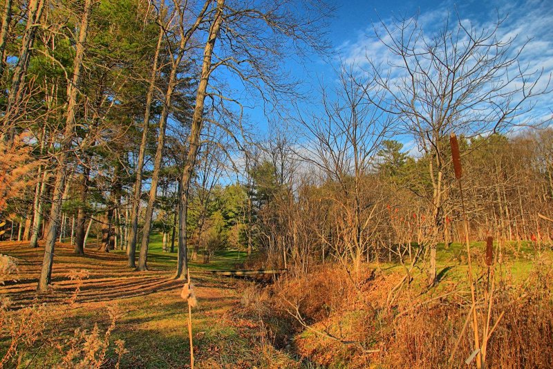 Tawasentha Park in HDR<BR>November 9, 2012