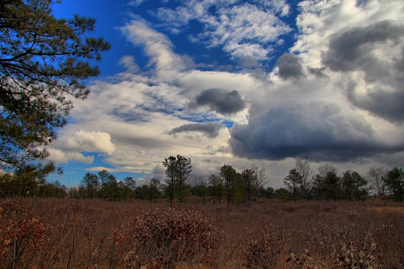 Pine Bush Preserve in HDR<BR>November 26, 2012