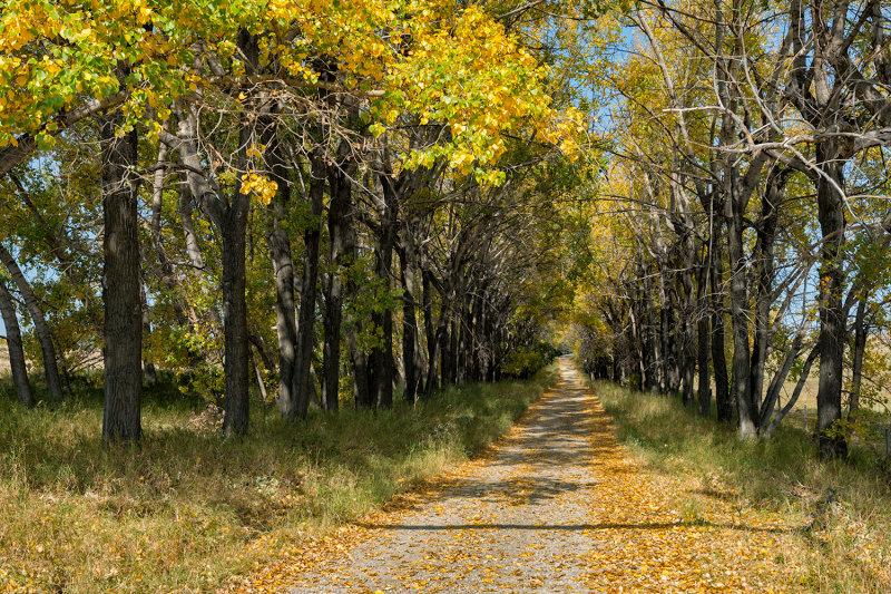 Ranch-road Fall