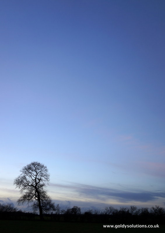 1st Feb 2013 - tree