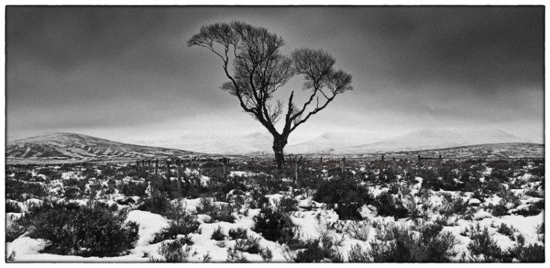Remote Tree - DSC_3409_11.jpg