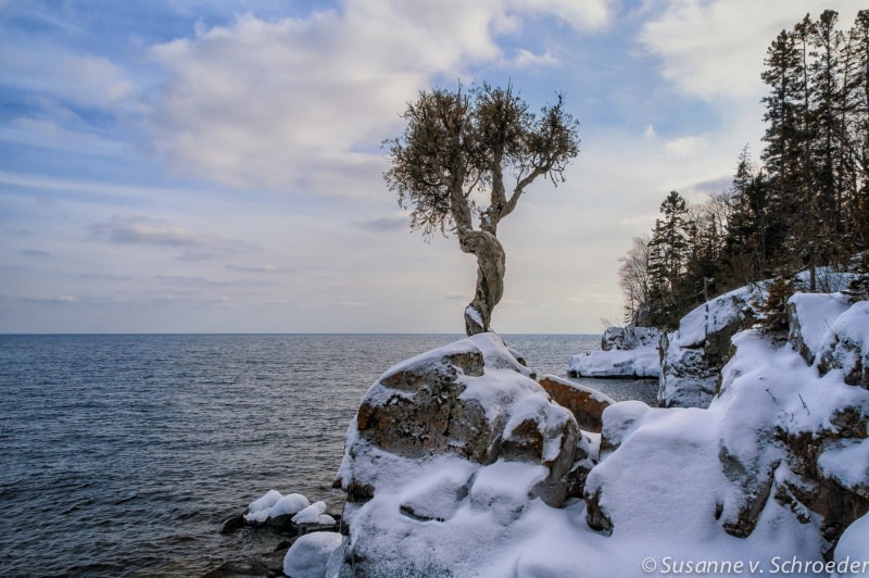 Witches tree, winter 1