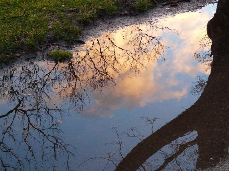 686 cambridge reflection.jpg