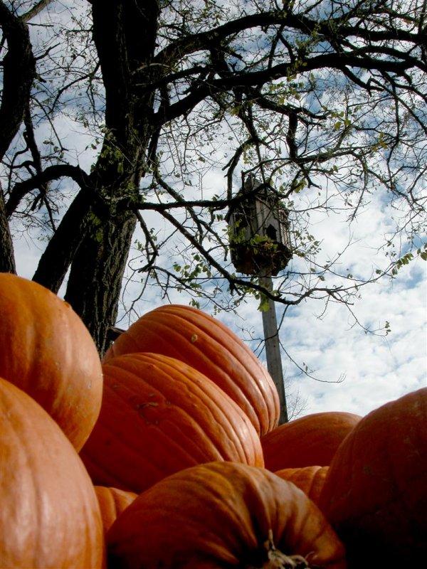 126 pumpkin still life 2.JPG