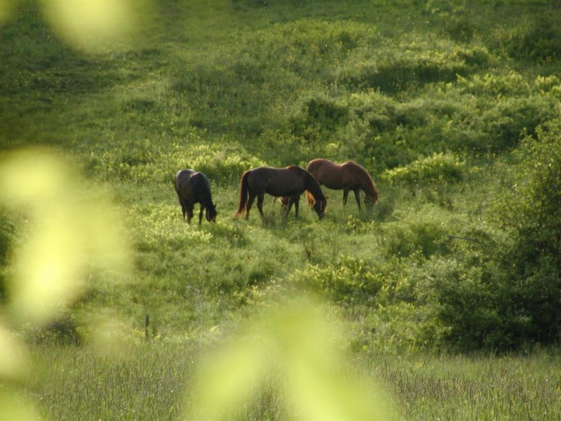 270 Conway 7 131 pum holl horses 1.JPG