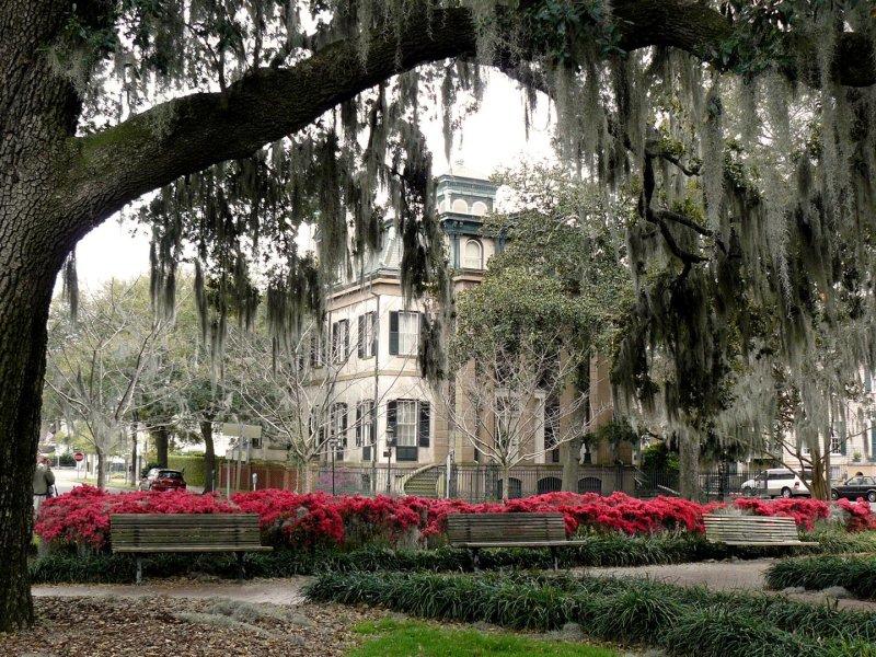 500 Savannah 249 Orleans Square.jpg