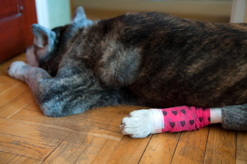 Injured And Bandaged