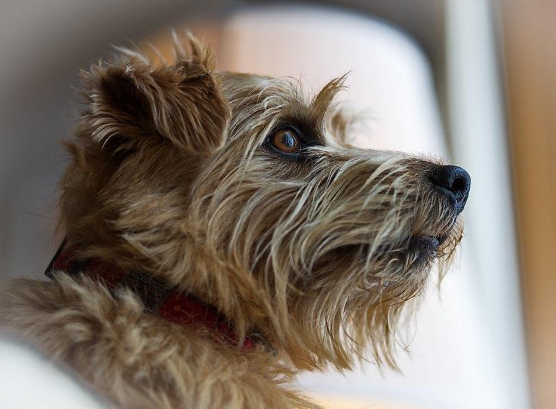 Murphy watching the world