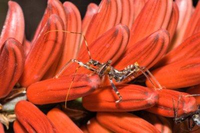 bug on flowers (_DSC5279)