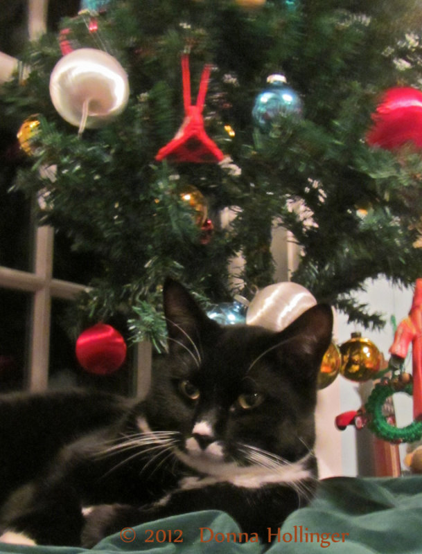 Jimi Finds the Christmas Tree