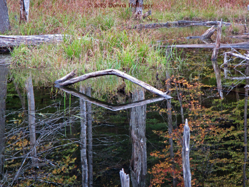 Mirror Image in the Beaver Pond