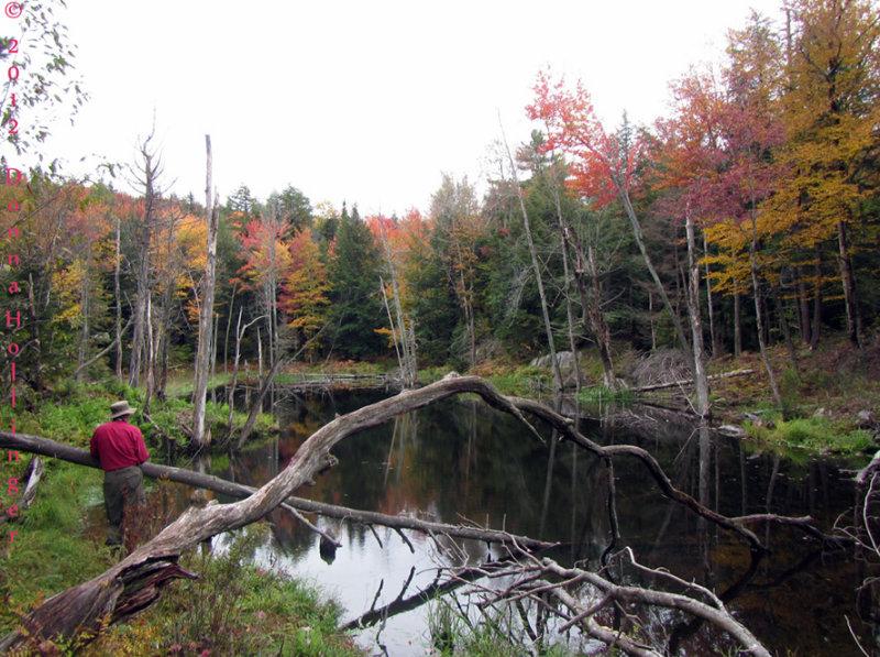 Fall 2012 Beaver Pond
