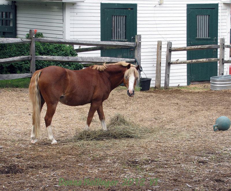 I am a pretty horse