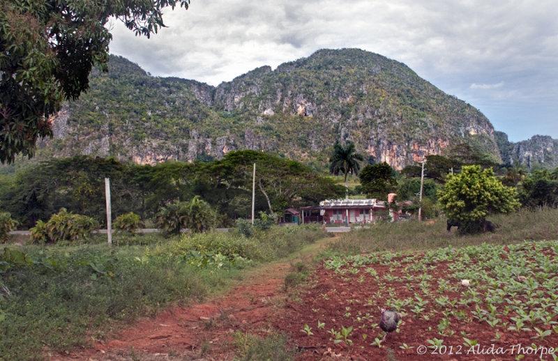 Viñales Valley farm