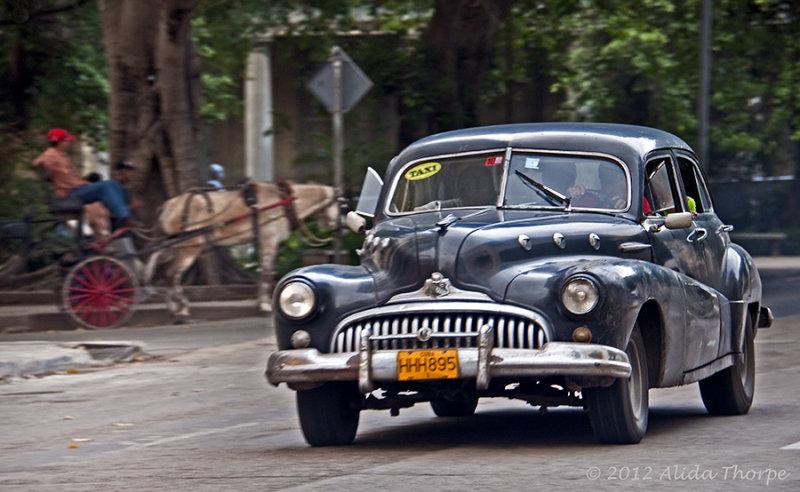black car horse