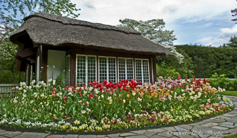 cottage tulips