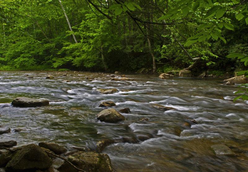 Back Fork of the Elk River