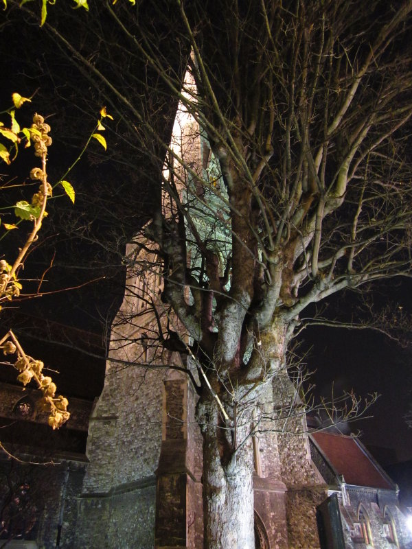 St. Edward  the  Confessor  Church,  and  tree.