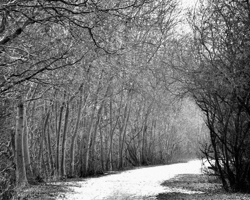 In the bleak mid-winter...<br>10 February 2012 (422)