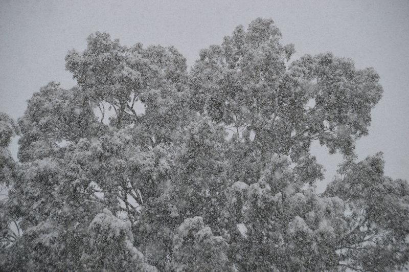 The Eucalyptus in the Cactus Garden