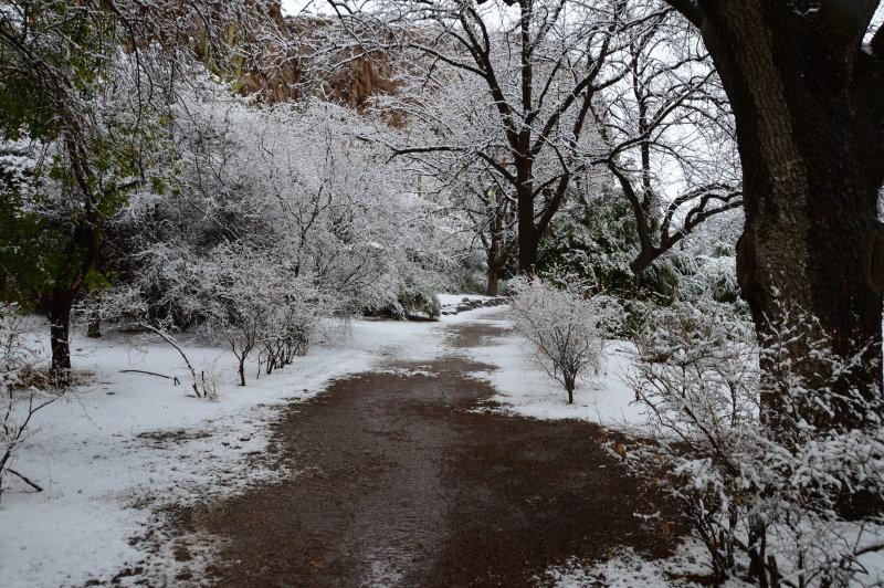 Walking through the Pistachio Grove in the canyon