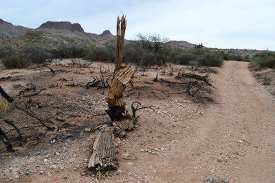 The road continues beyond Lime Tank. Tonto National Forest. In the 257 Fire burn area