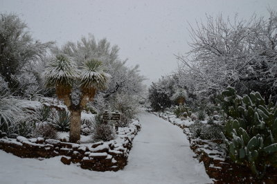 Entrance to Chihuahuan Garden