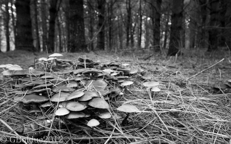Plein de champignons_Full of mushrooms