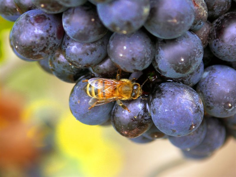 Think twice on where honey comes from !