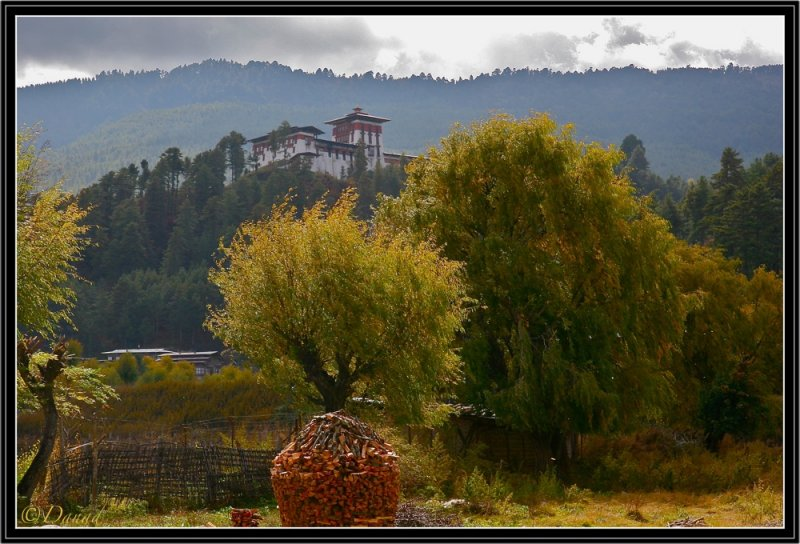 Jakar Dzong : Autumn Wind in Weeping Willow-trees.