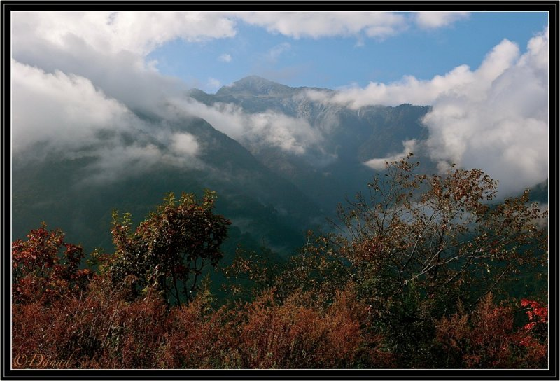 Black Mountain (5000 m.) near Trongsa.