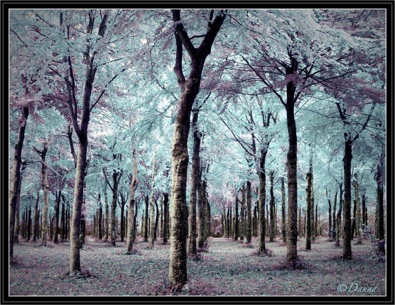 The Elves Wood.