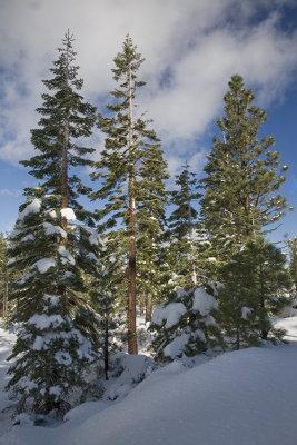 Tahoe Fresh Snow