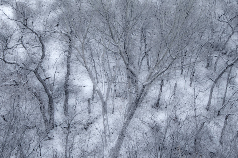 Silvery forest