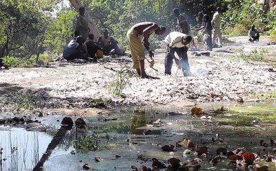 La mare aux silures sacrés de Dafra. Le sol est jonché des plumes blanches des poules sacrifiées à Dafra, Burkina Faso