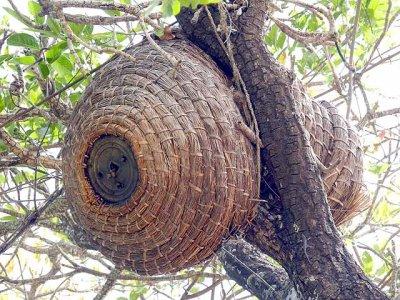 Traditional beehive in Burkina Faso