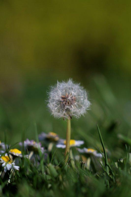 Dandy-Lion-Seeds-5D.jpg