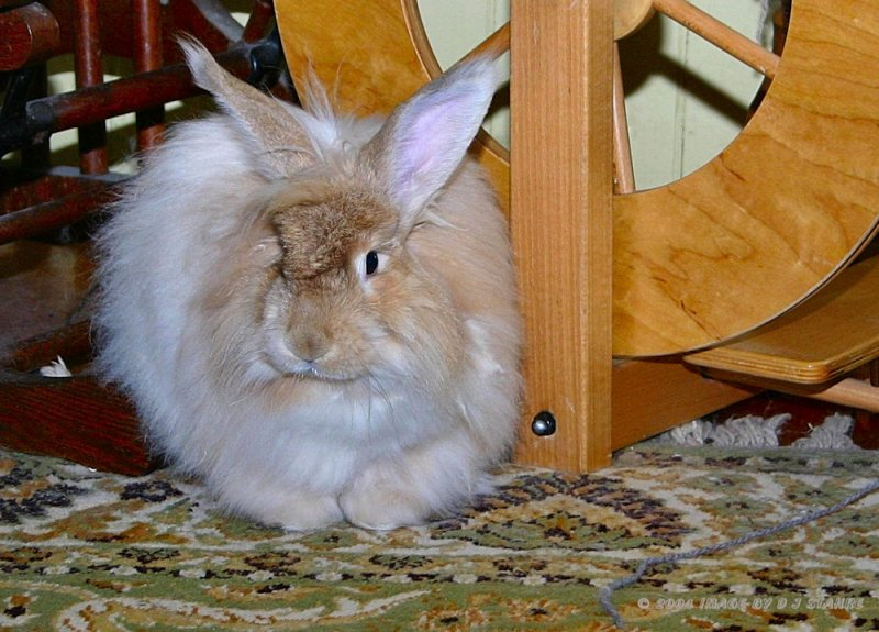 Harry Rabbit