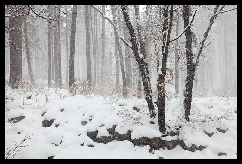 Winters Serenity