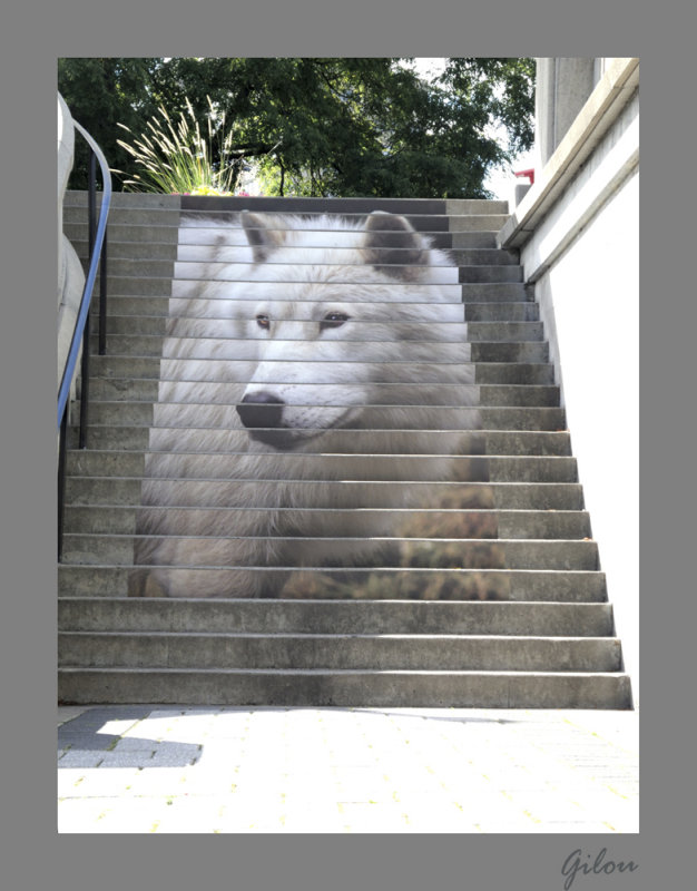 escalier à Ottawa, Canada