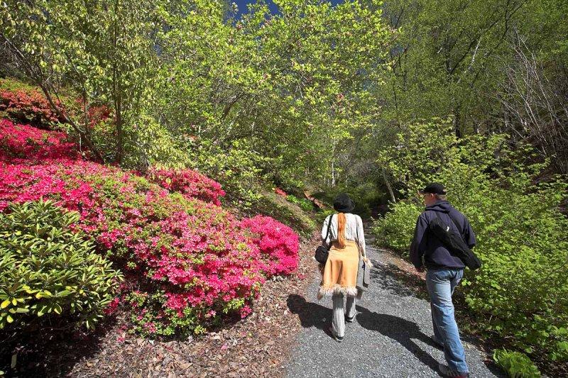 Mt Lofty Botannical Gardens