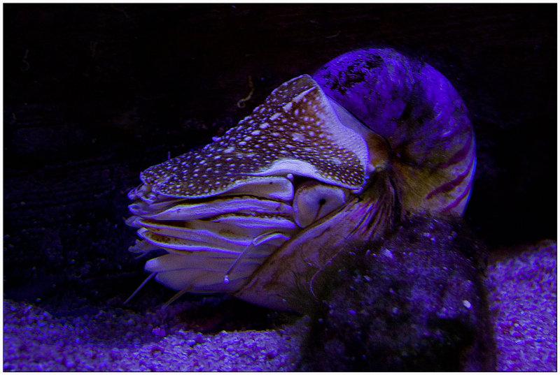 aquarium de san sébastien