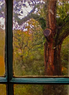 View from Oakley Plantation, St. Francisville, Louisiana, 2012