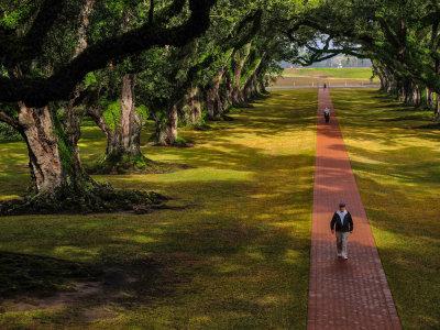 The Alley of Oaks, Oak Alley Plantation, Vacherie, Louisiana, 2012