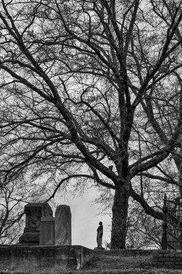 Barren tree, Rose Hill Cemetery, Macon, Georgia, 2013